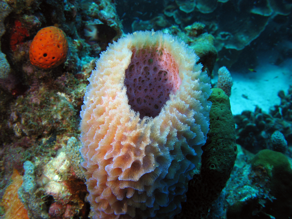 Eribulin, A Drug Originally Developed In Sea Sponges Can Increase Survival In Women With Triple Negative Breast Cancer