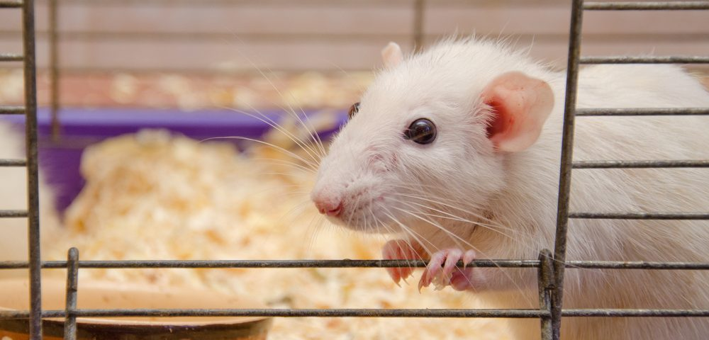 New Mouse Model May Help Identify Ways to Treat Metaplastic Breast Cancer
